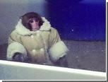 """Канадская """"обезьяна в пальто"""" проведет Рождество в приюте"""
