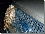 Из радиатора пикапа достали сову