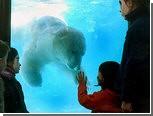 В аргентинском зоопарке от рождественской жары умер белый медведь