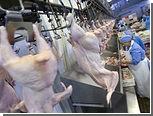 Европейцы пустили на рынок российскую курятину