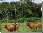 Вырубание лесов уменьшило разнообразие тропических микробов