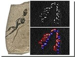 Физики помогли палеонтологам разглядеть зубы древней ящерицы
