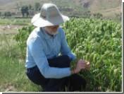 Просо назвали ключевым элементом перехода людей к земледелию