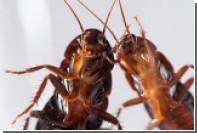 Ученые объяснили борьбу тараканов с одиночеством
