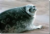 Турист пострадал от атаки тюленей в Новой Зеландии