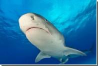 Четырехметровая акула подбросила туриста в воздух